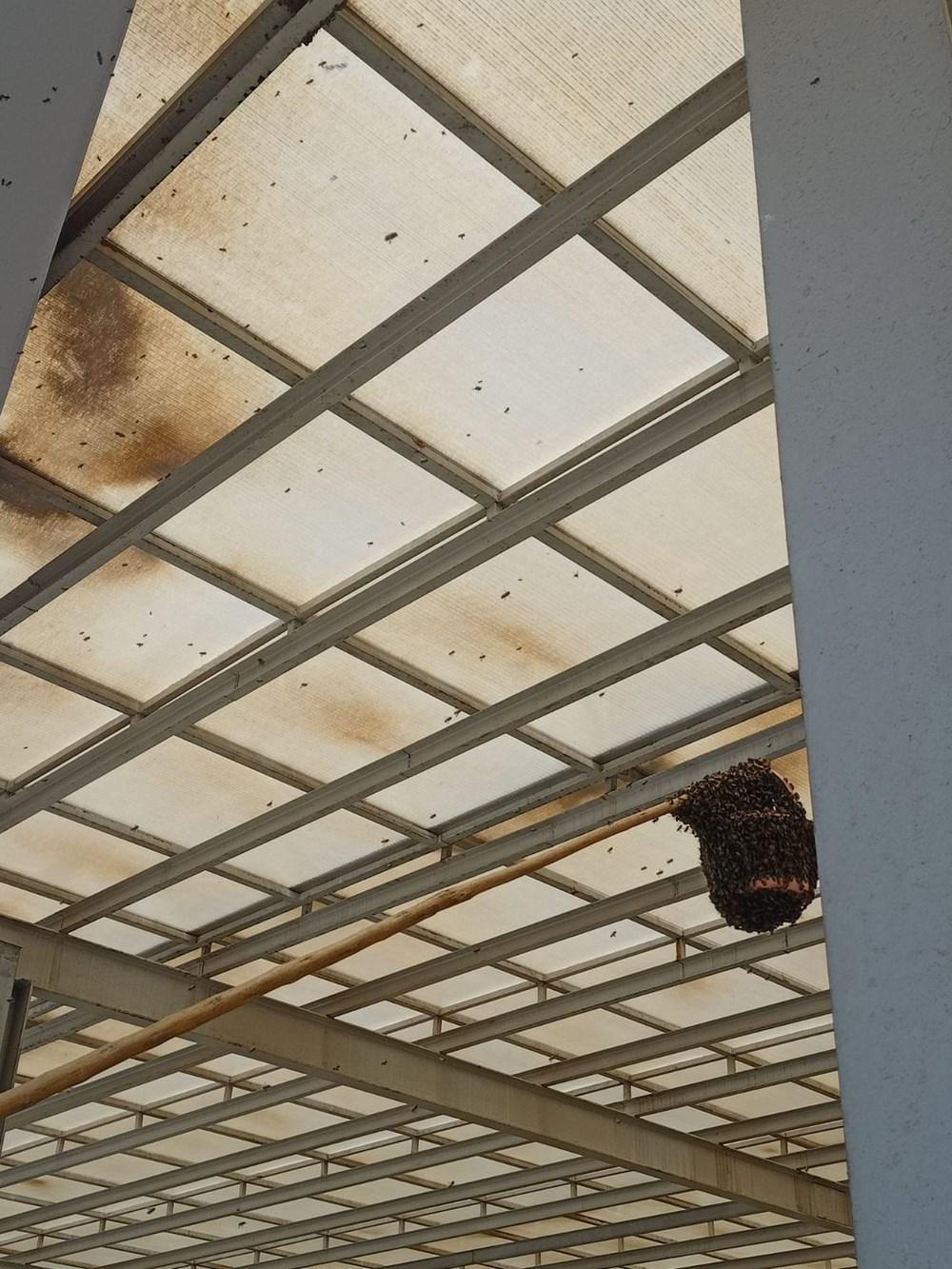 Hastanede panik: Acil servisi arılar bastı - 4