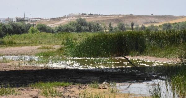 Balıkların, nehir kenarlarında bulunan ağaçlara ve taşlara takıldığı gözlendi. Ölü balıkların bölgede kötü kokuya da neden olduğu belirtildi.