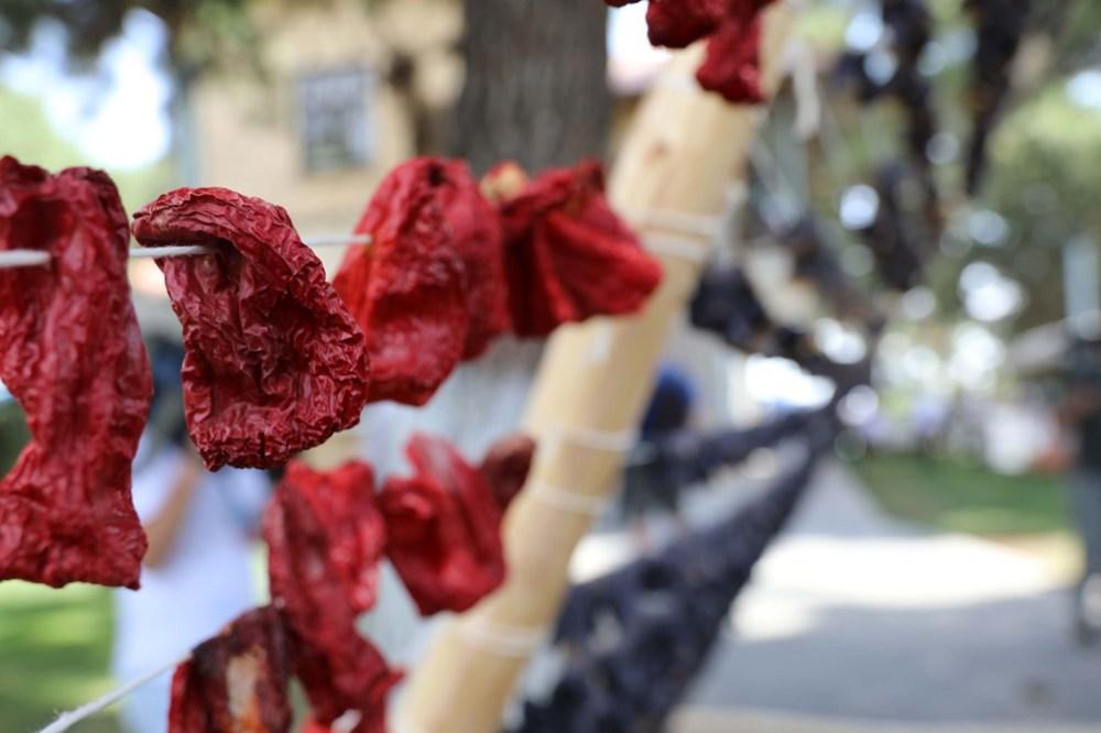 GastroAntep Festivali, fıstık hasadı ve şire yapımı ile başladı - 13