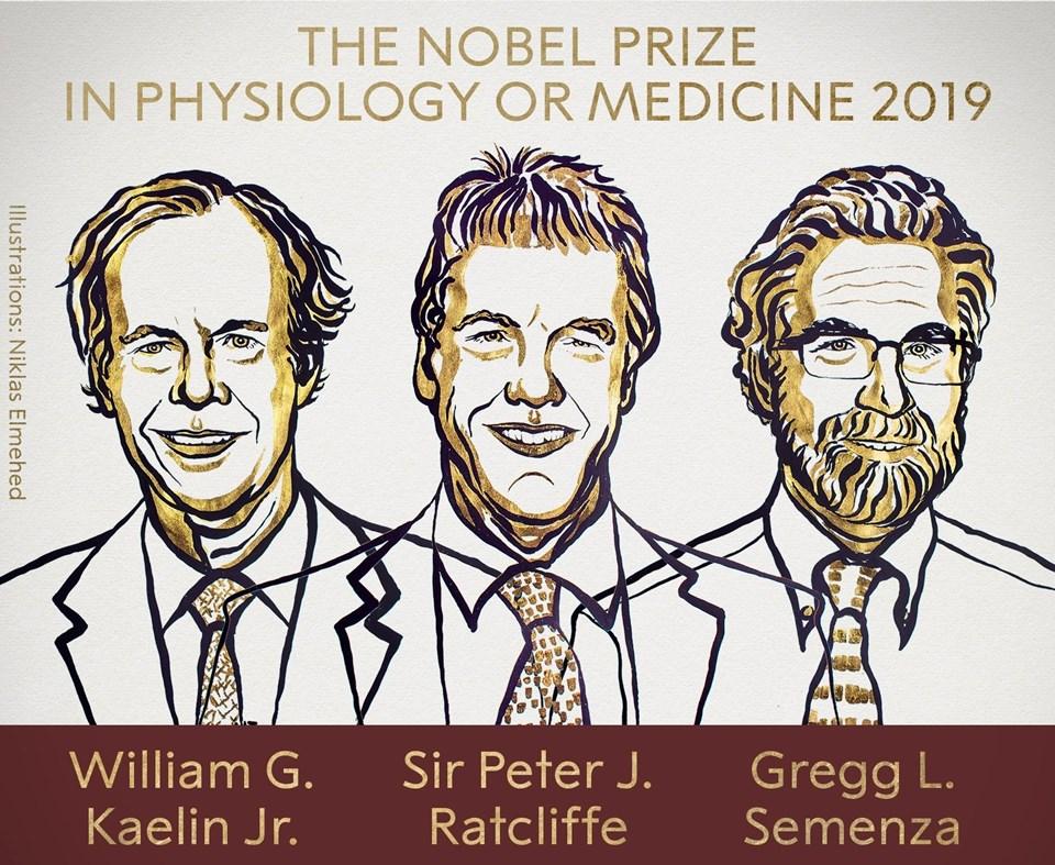 2019 Nobel Tıp ödülüne layık görülen araştırmacılar.