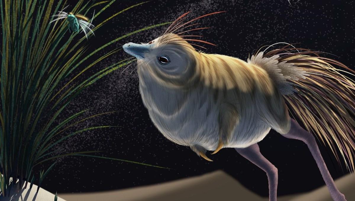 Olağanüstü gece görüşüne ve işitme yeteneğine sahip dinozor türü keşfedildi: Shuvuuia