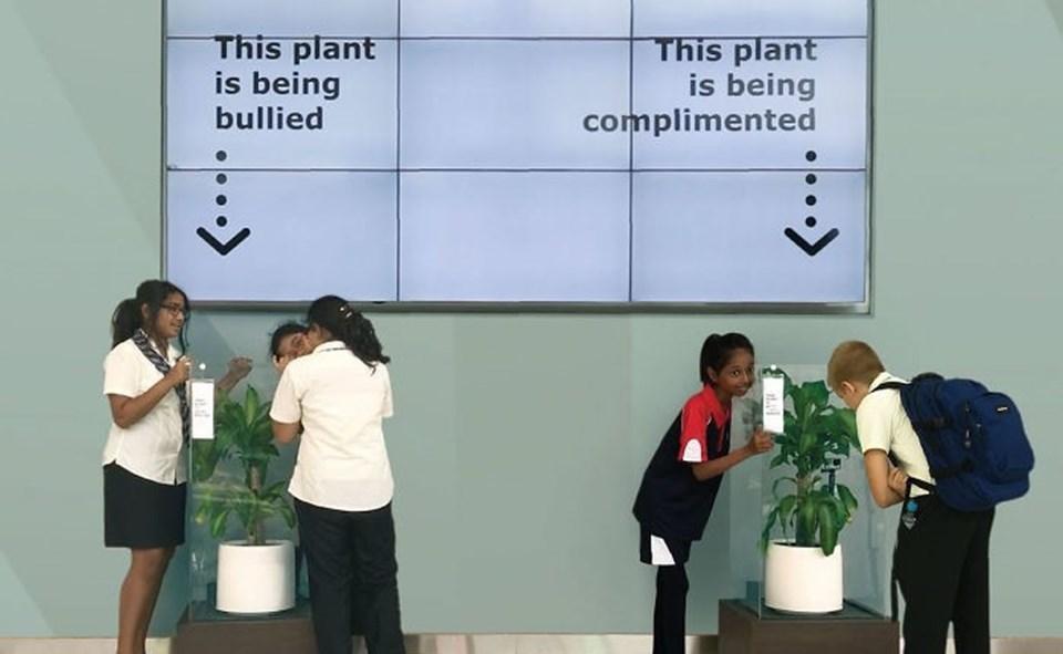 Deney IKEA'nın desteğiyle Birleşik Arap Emirlikleri'ndeki bir okulda yapıldı.