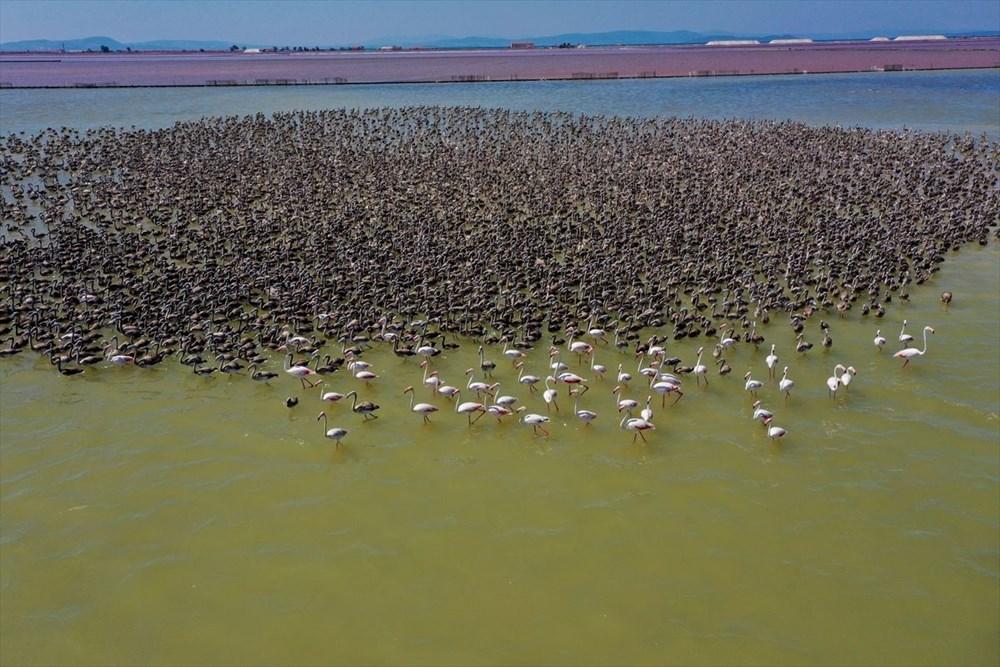İzmir Kuş Cenneti'nde 18 bini aşkın yavru flamingo kreşte uçma hazırlığı yapıyor - 3