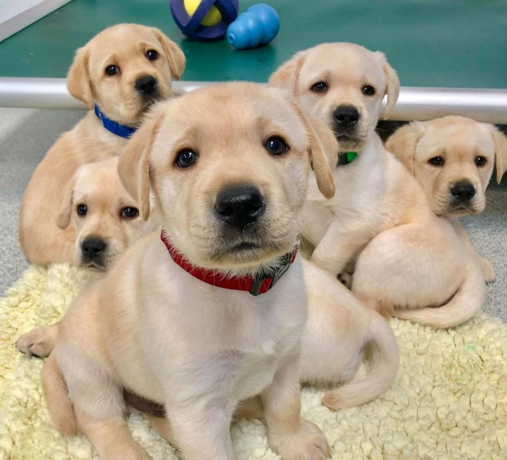 Köpekler doğdukları andan itibaren insanları anlayabiliyor - 4