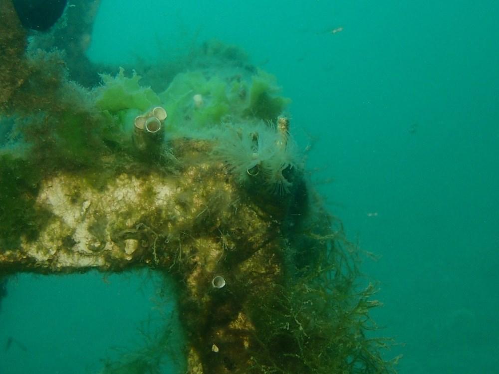 Mersin sahilleri müsilaj tehlikesi altında - 7