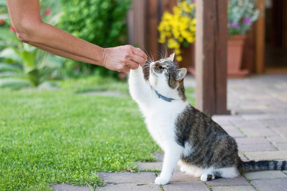 """Bilim insanları """"açık ilişki""""den """"eş bağımlılığa"""" kedilerle insanlar arasındaki 5 ilişki türünü ortaya koydu: Sizin kedilerle aranızda nasıl bir bağ var? - 7"""