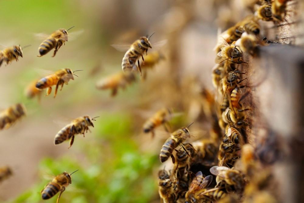 <p>Bununla birlikte, Međimurje İlçesi Arıcılar Birliği'nden Željko olayı büyük bir ekosistem felaketi olarak tanımlarken, Pčelinjak Derneği'nin (Kovan Derneği) Başkanı Dražen Jerman ise bölgedeki arıların ilk kez zehirlenmediğini ve bilinçsiz tarım ilacı kullanımına karşı daha önce pek çok kez protesto düzenlediklerini söyledi.</p>