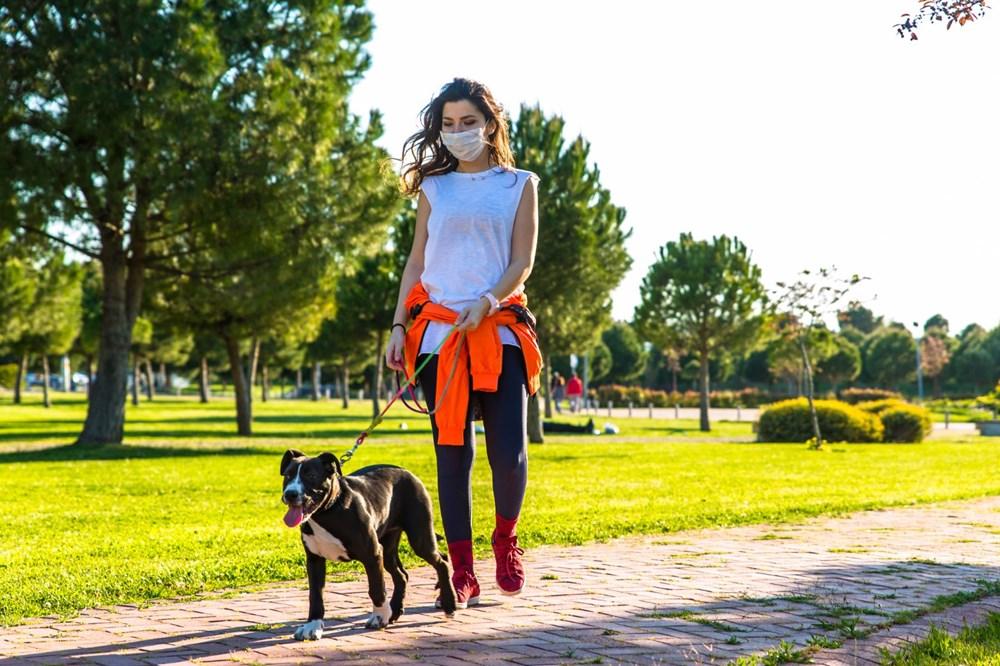 Pandemide sahiplenilen her beş köpekten biri terk edilme riskiyle karşı karşıya - 2