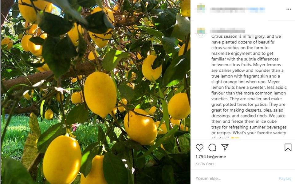 Jason Mraz çiftliğindeki ürünlerin fotoğraflarını paylaşıyor