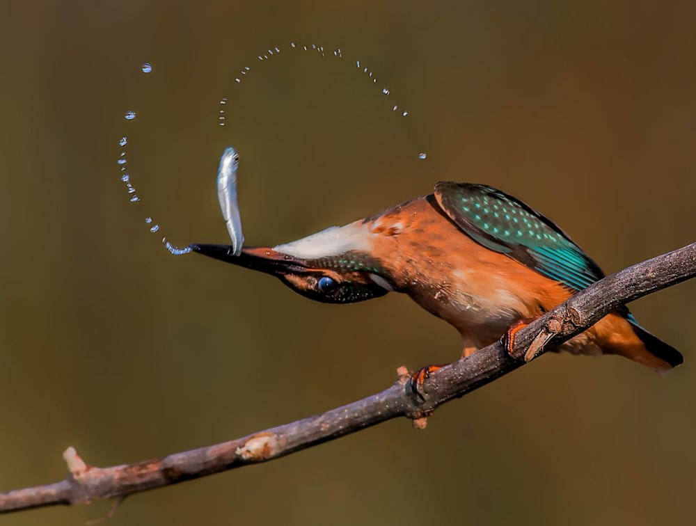 Fotoğraf tutkunu cumhuriyet savcısı 358'inci kuş türünü belgeledi - 4