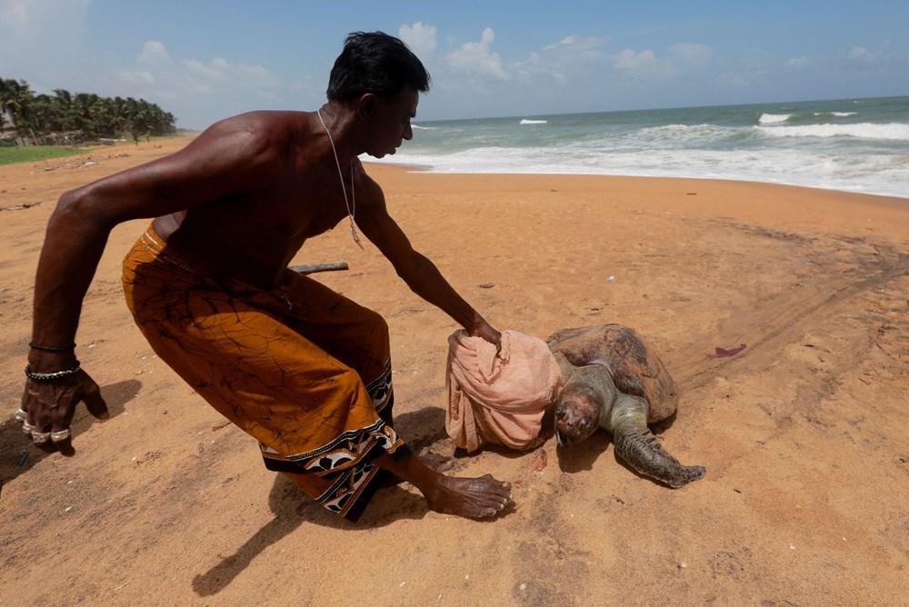 Yüzyılın en kötü çevre felaketlerinden: Onlarca yunus, balina ve kaplumbağa kıyıya vurdu - 3
