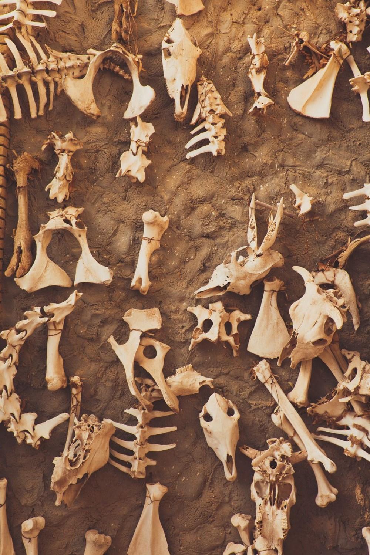 İklim değişikliği on binlerce yıl önce Neandertalleri yok etti - 3