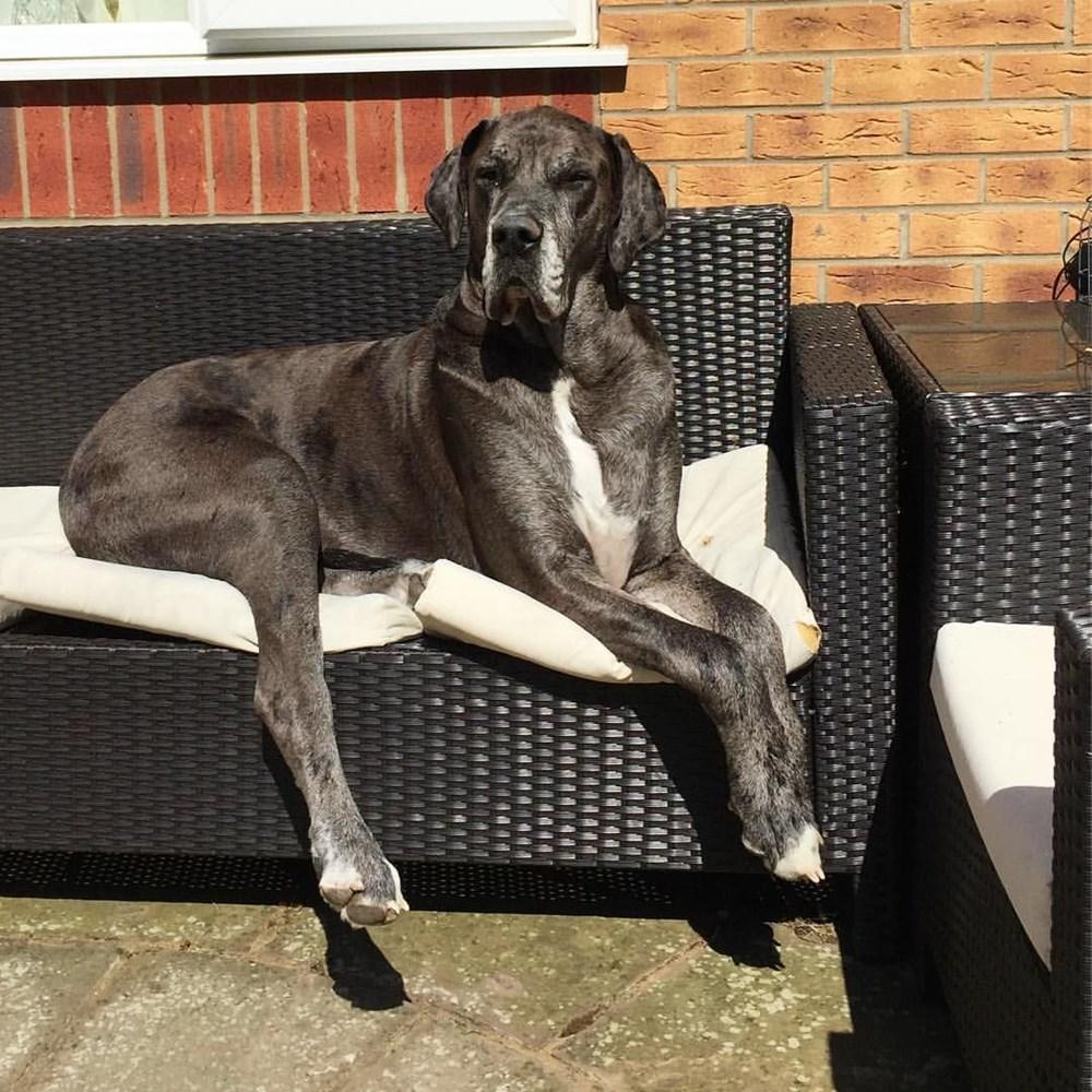 Dünyanın en uzun köpeği Freddy hayatını kaybetti - 17