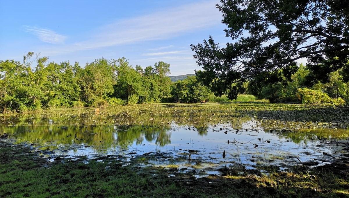 Yeşilin binbir tonunun suya karıştığı güzellik: Bursa Karacabey Longozu