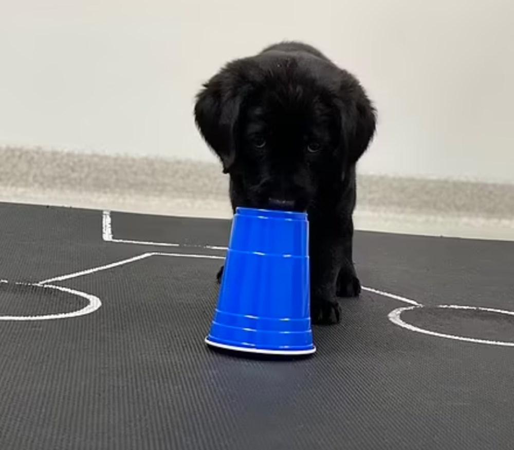 Köpekler doğdukları andan itibaren insanları anlayabiliyor - 7
