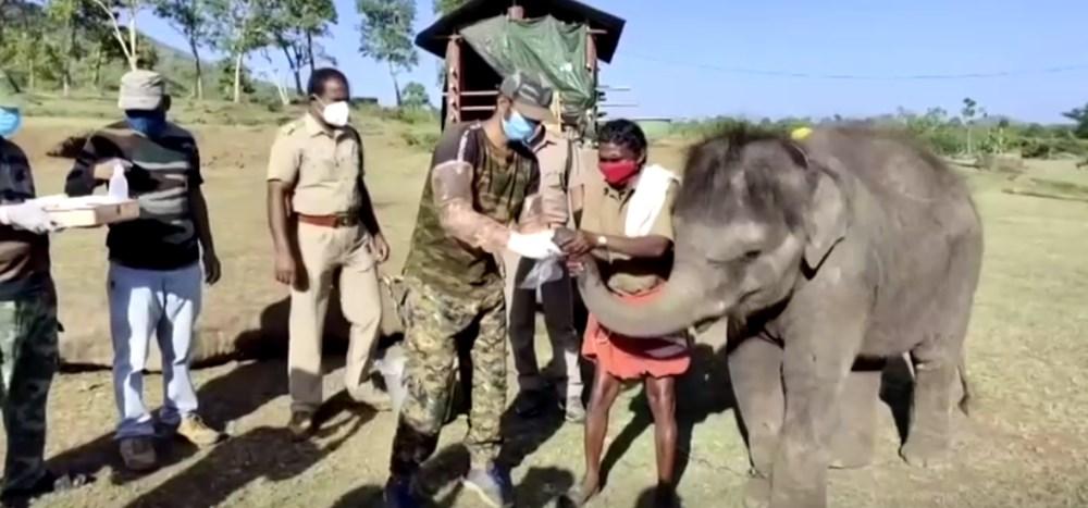Hindistan'da bir aslanın Covid-19'dan ölmesinin ardından 28 fil corona virüse yakalandı - 5