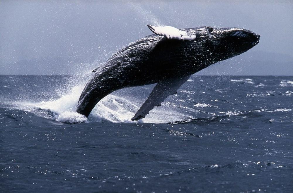 4 Ekim Dünya Hayvanları Koruma Günü hakkında her şey - 11