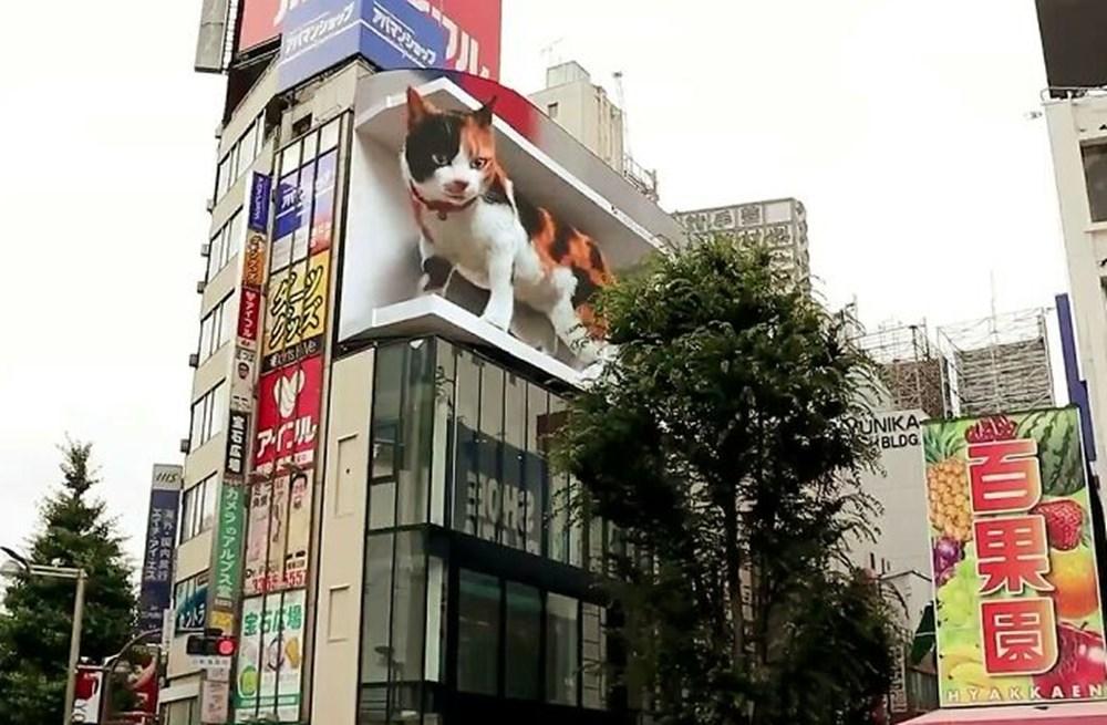 Tokyo'nun yeni misafiri 3 boyutlu kedi: Şehri izliyor ve halkı selamlıyor - 3