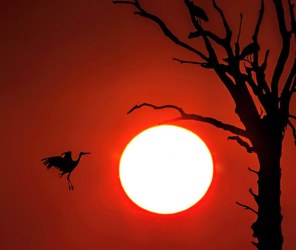 Fotoğraf tutkunu cumhuriyet savcısı 358'inci kuş türünü belgeledi - 10