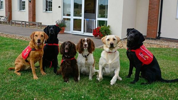"""""""Köpekler 6 haftalık eğitimle corona virüs hastalarını yarım saniyede tespit edebilir"""""""