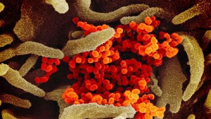 corona virüsü ekşi