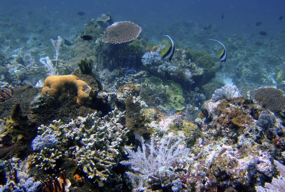 Küresel ısınma, deniz yaşamının kaynağı olan mercan resiflerini yok ediyor - 4