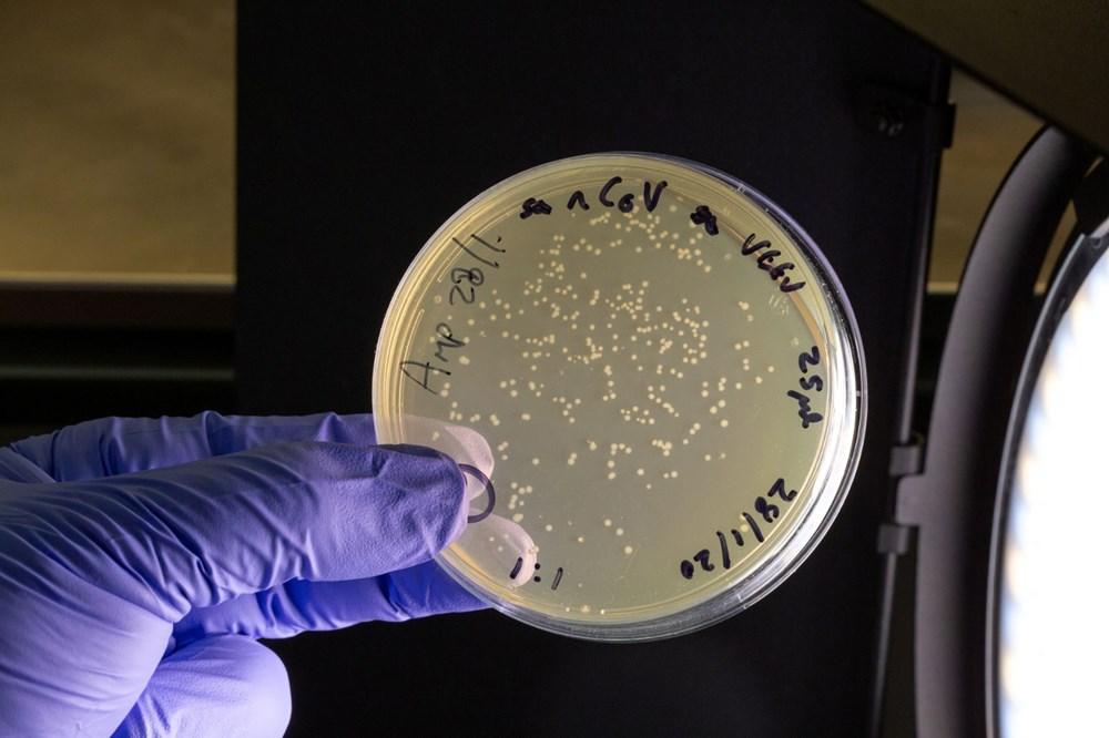 DSÖ'den corona virüs tedavisinde steroid açıklaması - 7