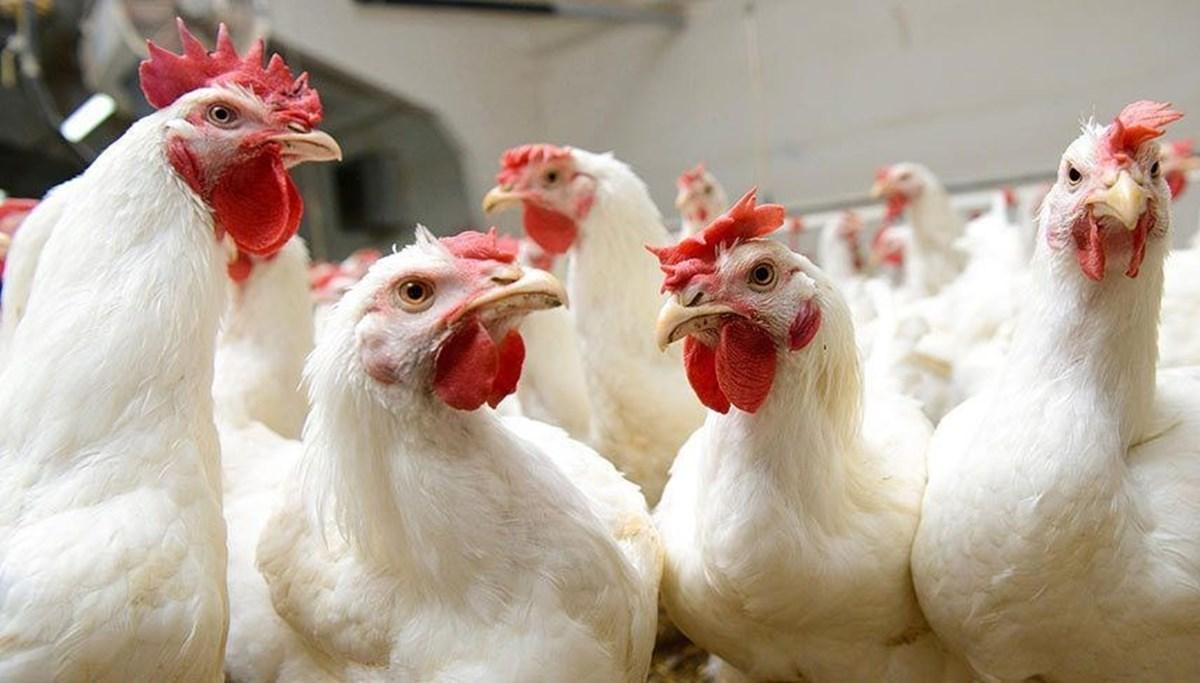 Brezilya'dan Çin'e gönderilen dondurulmuş tavuk kanatlarında corona virüs tespit edildi