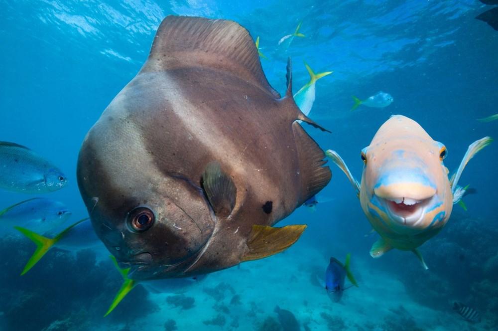 İklim değişikliği, Büyük Set Resifi'ndeki mercanların yarısını yok etti - 2