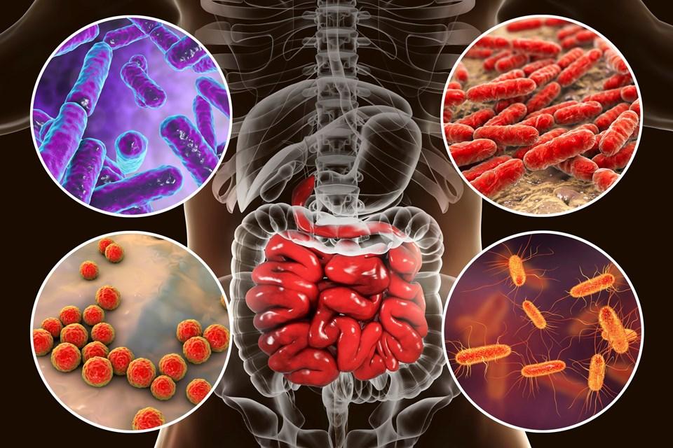 Bağırsak mikrobiyotası, vücudun iç ekosistemi olarak nitelendiriliyor.
