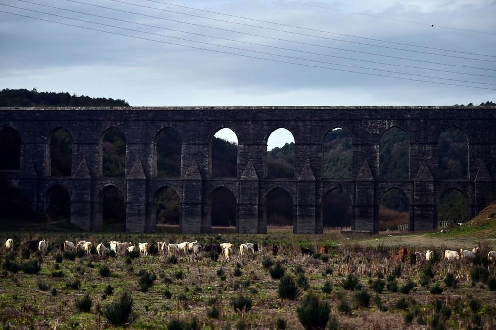 Balıkların yüzdüğü baraj, koyunlara kaldı - 12