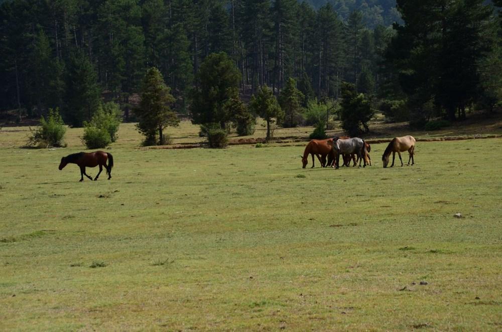 Soyları Osmanlı süvari birliğine dayanıyor! Torosların vahşi güzelliği 'Yılkı atları' - 20