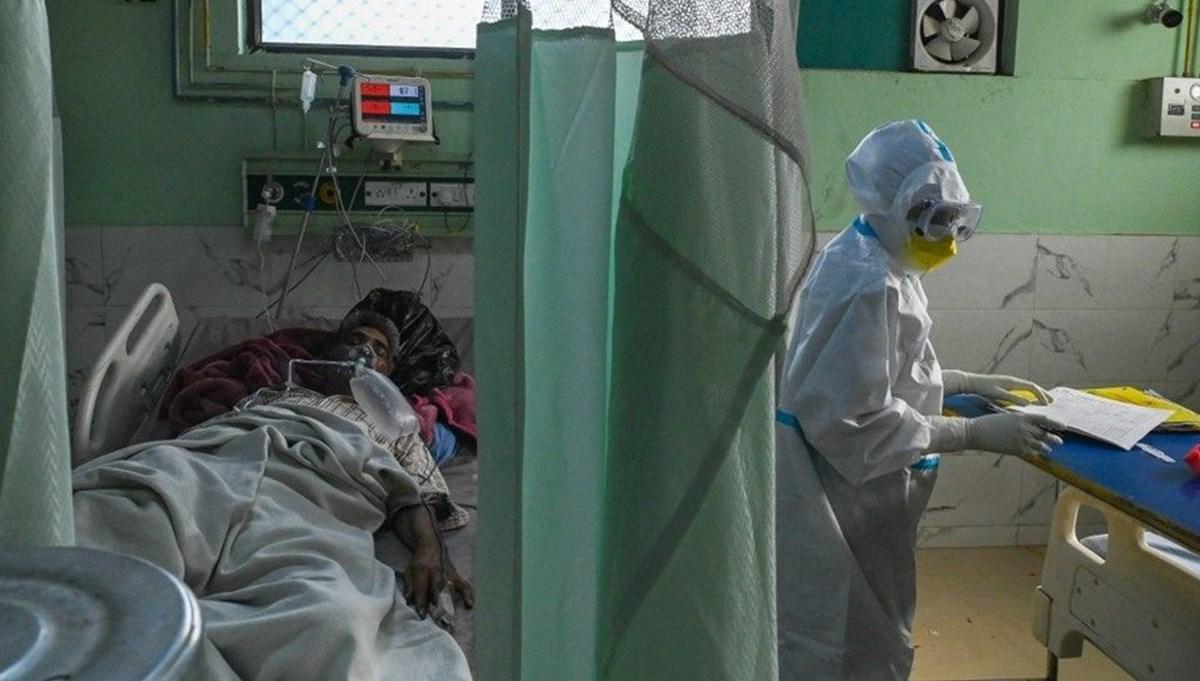 Kara mantar hastalığı Meksika'ya da sıçradıDÜNYA