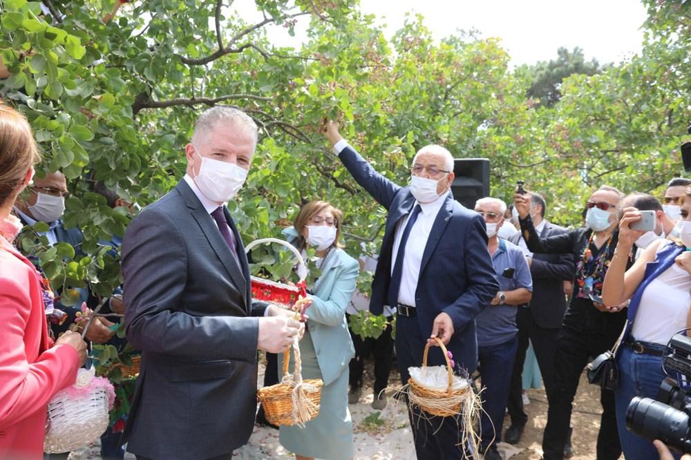 GastroAntep Festivali, fıstık hasadı ve şire yapımı ile başladı - 2