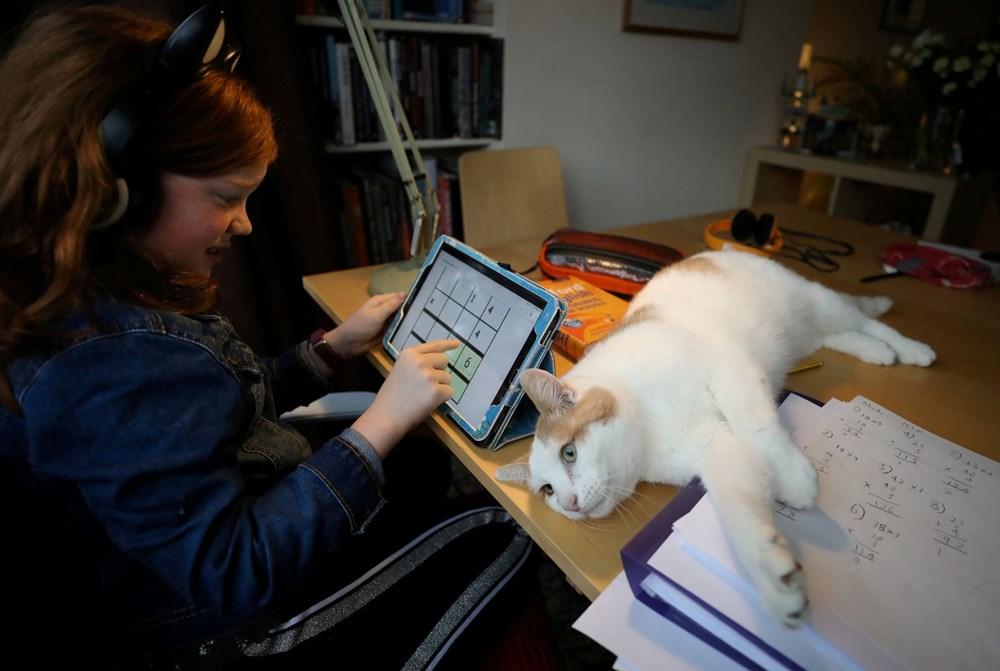 Araştırma: Karantina nedeniyle kediler insanlardan bıktı, sakinleştirici kullanıyorlar - 2