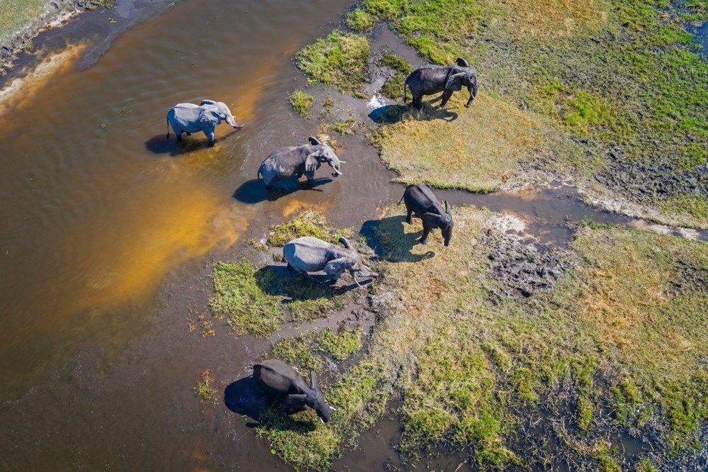 Bostvana'daki gizemli fil ölümlerinin nedeni açıklandı - 3