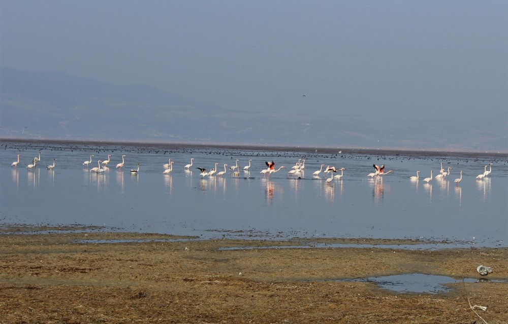 'Kuş cenneti' Marmara Gölü'nde derinlik 40 santimetreye düştü - 8