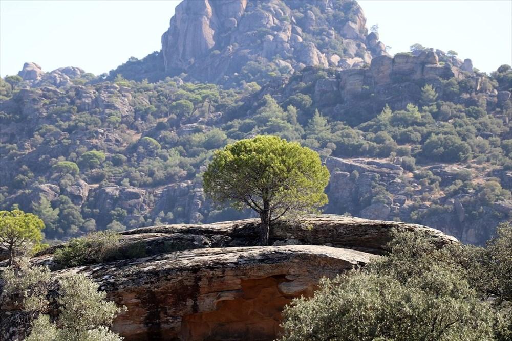 Latmos'daki kaya resimleri, dünyaya kardeşlik mesajıyla tanıtılacak - 1