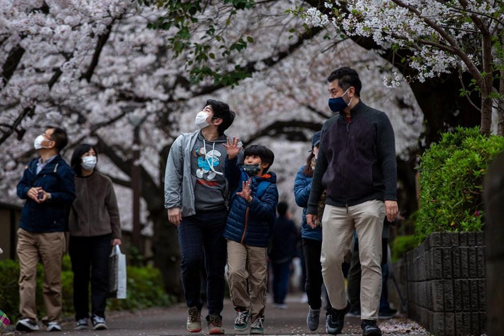 Sakura çiçekleri son bin 200 yıldır bu kadar erken açmadı: İklim değişikliği nedeniyle ekosistemler çökme noktasında - 8