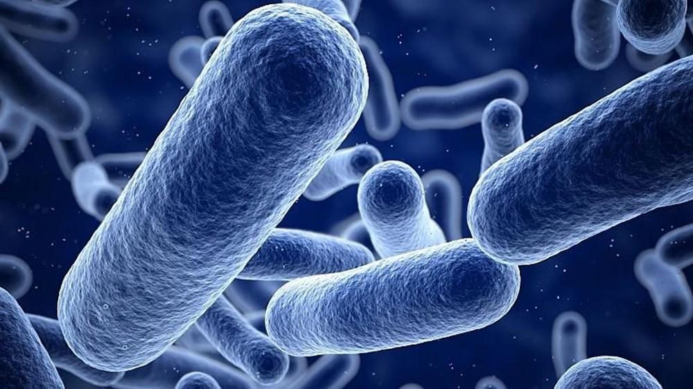 Gelecek için hayati öneme sahip: Petrolü ve dizel yakıtı temizleyebilen yeni bakteri türleri keşfedildi - 7