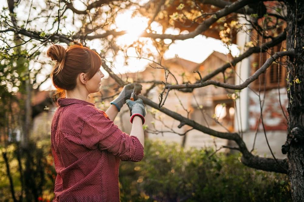 Araştırma: Her üç ağaçtan biri yok olma tehlikesiyle karşı karşıya, hangi ağaçlar tehlikede? - 2