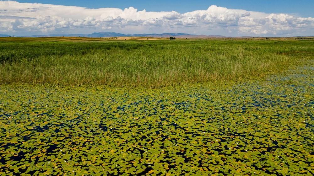 Türkiye'nin en büyük nilüfer bahçesi: Beyşehir Gölü - 17