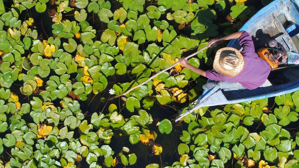 Türkiye'nin en büyük nilüfer bahçesi: Beyşehir Gölü - 3