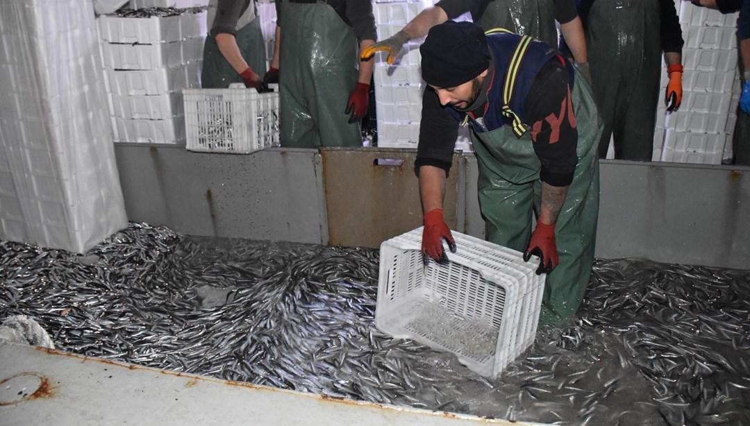 Balıkçılardan hamsi avının serbest olduğu İğneada'ya akın