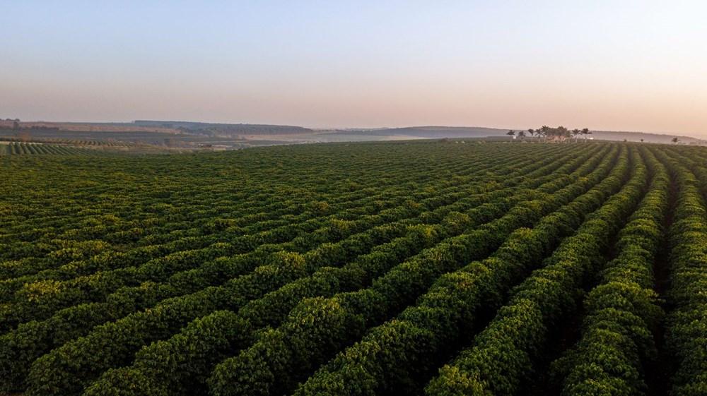 Kahve tiryakilerine iklim değişikliği uyarısı: Yüzde 60'ı tükeniyor - 5