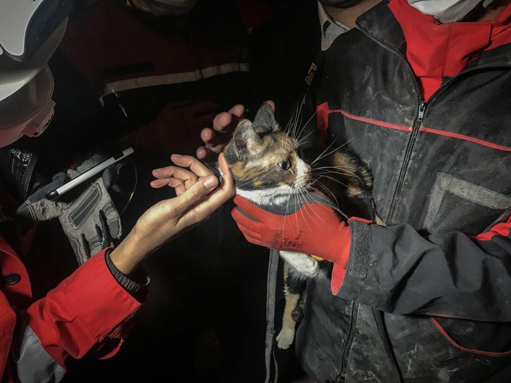 İzmir'de enkazda K-9 köpeği kediyi kurtardı - 2
