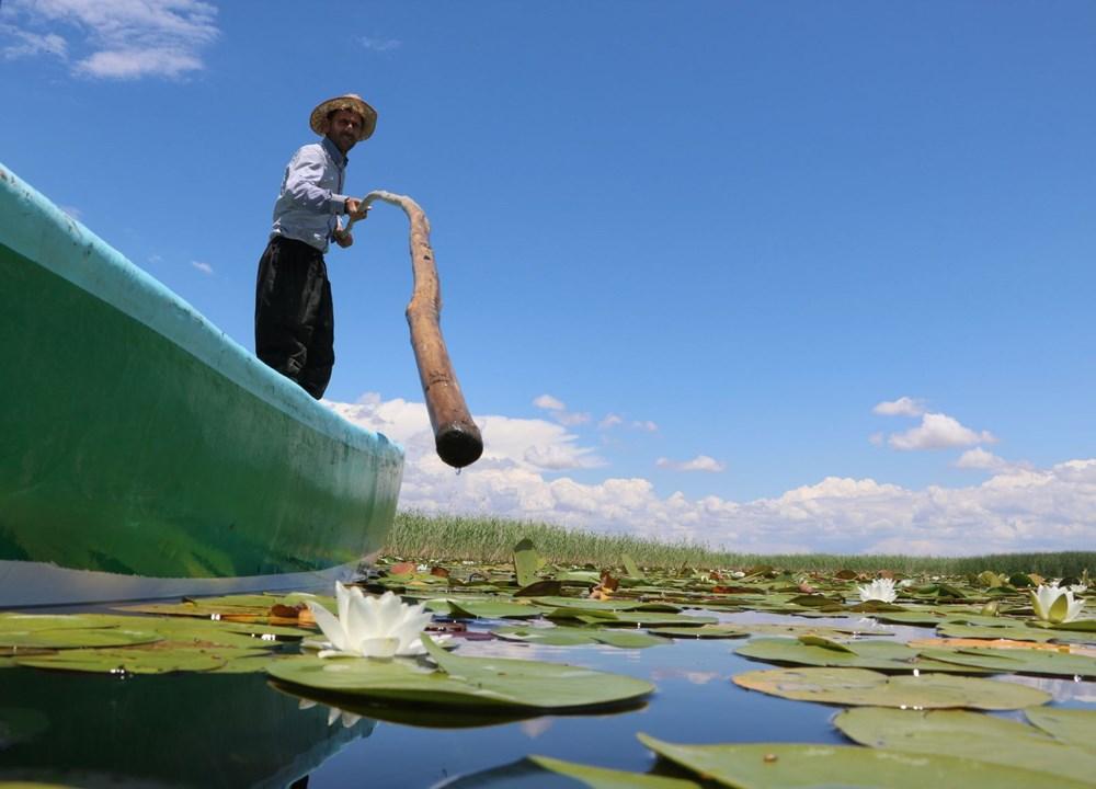 Türkiye'nin en büyük nilüfer bahçesi: Beyşehir Gölü - 7