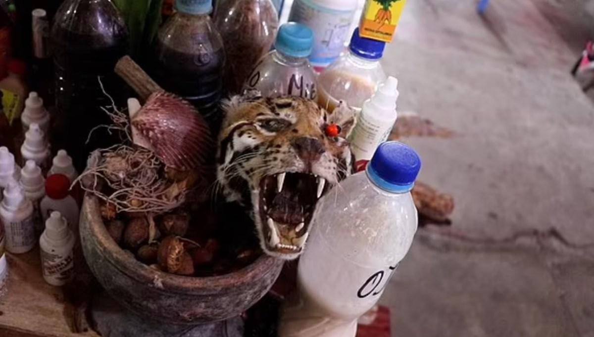 Amazon ormanlarındaki 200'den fazla türün Peru'da yasadışı olarak satıldığı ortaya çıktı: Bilim insanlarından yeni pandemi uyarısı