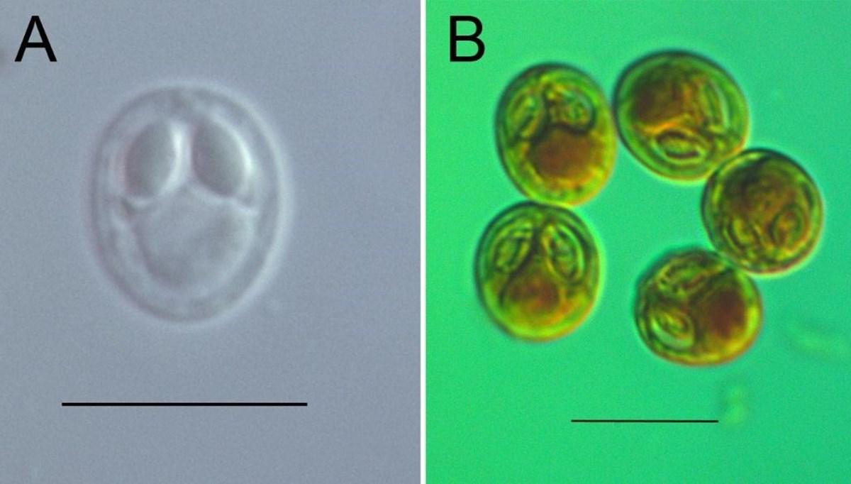 Türk bilim insanları 4 yeni parazit türü keşfetti