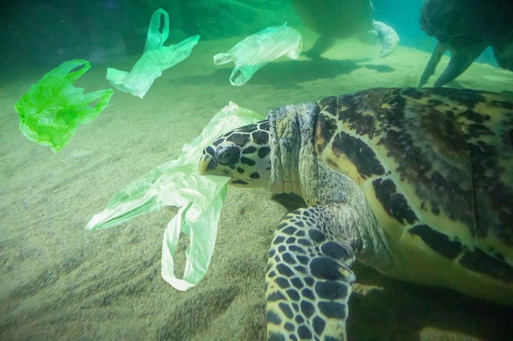 Plastik kirliliği Akdeniz'de kimyasal düzeylere ulaştı: Caretta carettalar ölüyor - 6